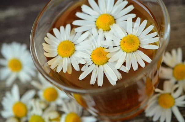 chamomile tea medicine garden medicinal