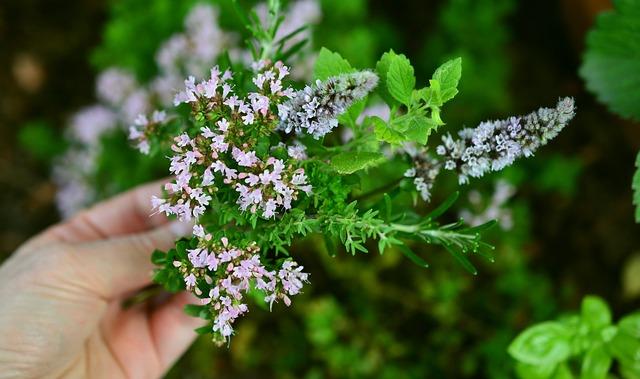 garden flower identification herbs small purple pink