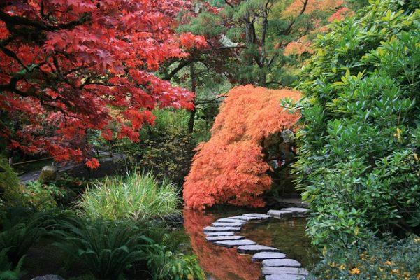 japanese botanic gardens pond red maple bridge stones