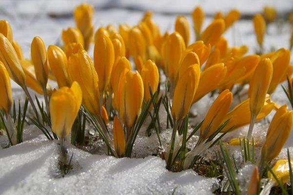 spring snow botanic gardens flowers