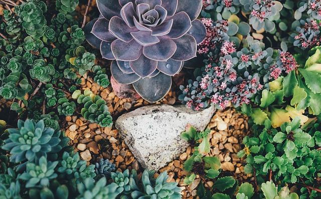 succulents gardens botanic rock