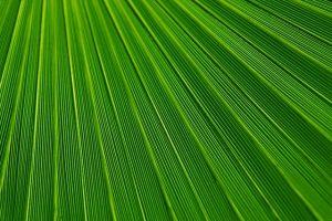 plant leaf vein