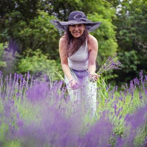 foraging for lavender