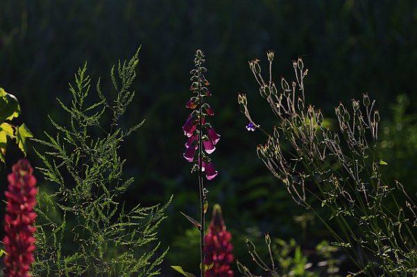 plant growing in your garden