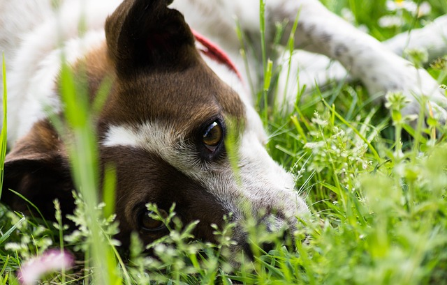 Dog-Safe Plants and How to Make a Dog-Friendly Garden