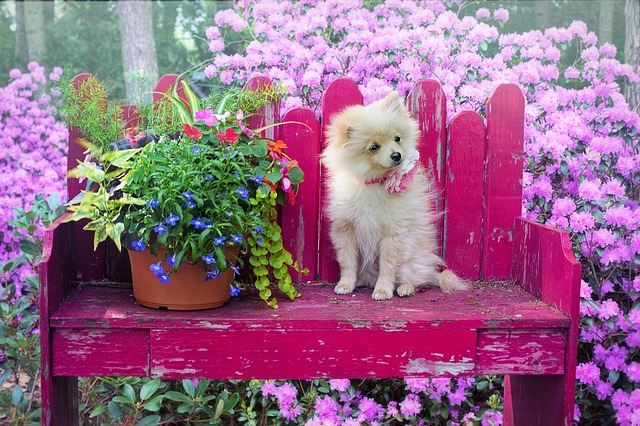 Dog Safe Plants And How To Make A Dog Friendly Garden