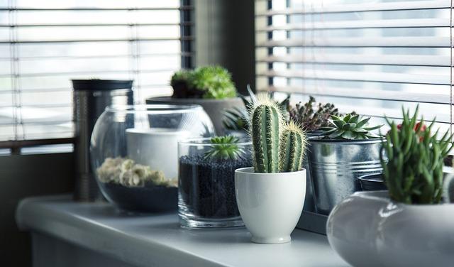 cactus identification succulents