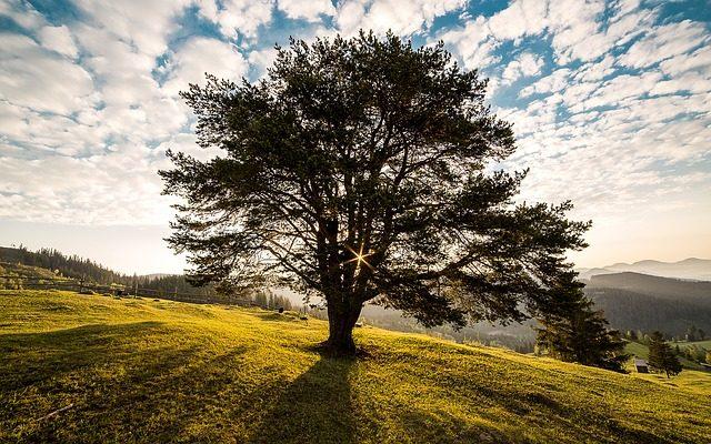 tree plant identification app