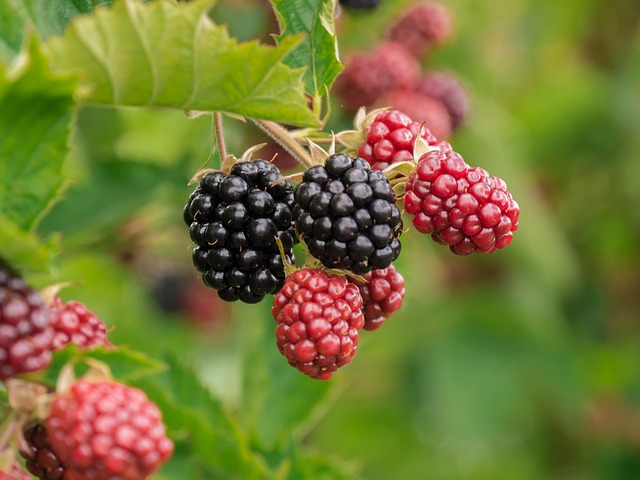blackberry raspberry