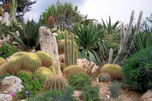 exotic gardens of monaco