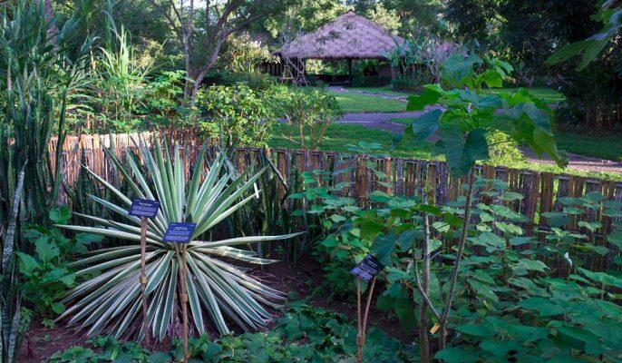 pha tad ke botanical gardens